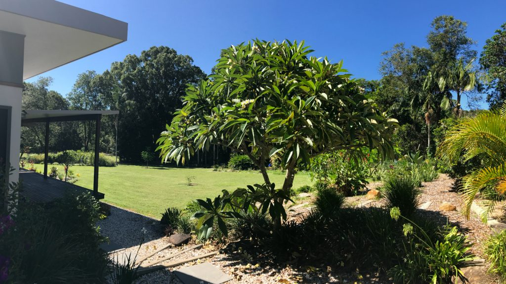 Byron Bay Lily Pad Frangipani