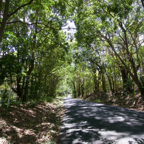 Skinners Shoot Road