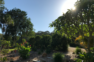 Lily Pad Sunrise