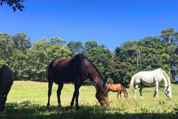 The Herd Horses