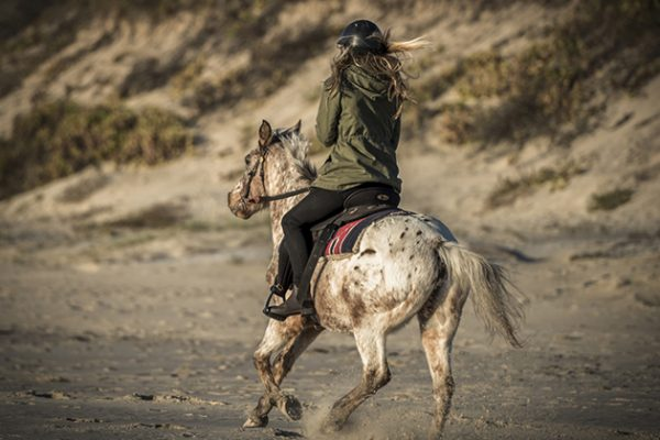 Zephyr Horses Byron Bay