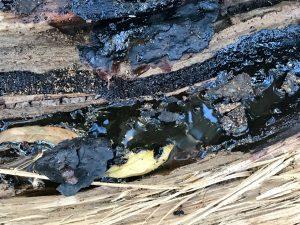 Honey glistens in the log!