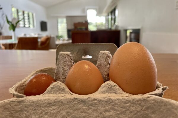 Early eggs