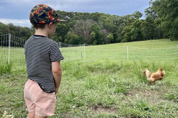 Fitz visits the chooks for the first time